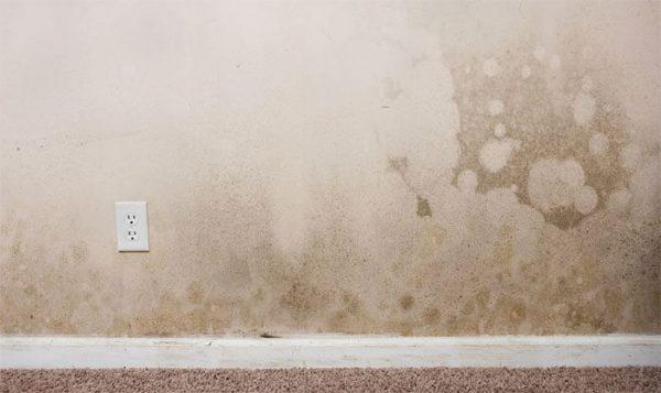 Chống thấm tường nhà bị mốc mùa mưa